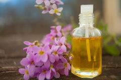 Essential oil of Arabis flower on a table in beautiful bottle Royalty Free Stock Photos