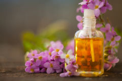 Essential oil of Arabis flower on a table in beautiful bottle Royalty Free Stock Photography