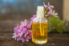 Essential oil of Arabis flower on a table in beautiful bottle Royalty Free Stock Photo