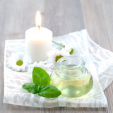 Essential oil basil Stock Images
