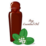 Essential oil of Bay tree Royalty Free Stock Images