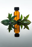 Essential oil bottle with myrtle leaves, in amber glass with dropper Royalty Free Stock Images