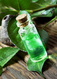Essential Oil Bottle.Tea Tree Essence Stock Photo