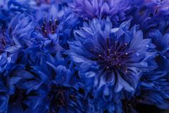 Essential oil of cornflower on a dark stone background royalty free stock photography