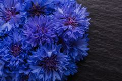 Essential oil of cornflower on a dark stone background royalty free stock image