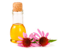 Essential oil of Echinacea purpurea isolated on white background Royalty Free Stock Photos
