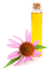 Essential oil of Echinacea purpurea isolated on white background Stock Image