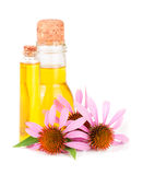 Essential oil of Echinacea purpurea isolated on white background Royalty Free Stock Photography