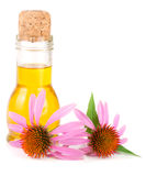 Essential oil of Echinacea purpurea isolated on white background Stock Images