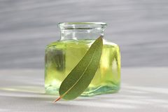 Essential oil of eucalyptus Stock Photos