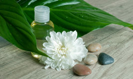 Essential oil with flower and stones. Royalty Free Stock Image
