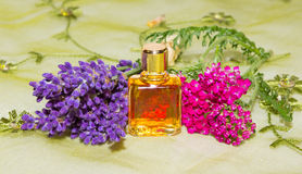 Essential oil with fresh flowers Stock Images