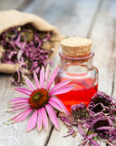 Essential oil in glass bottle and coneflower  Stock Image