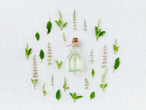 Essential oil  with holy basil leaf and flower. Stock Photos