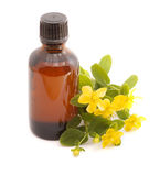 Essential oil of Hypericum perforatum. Stock Photos