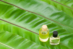 Essential oil on the leaves. Essential oil on the green fern leaves Stock Photos