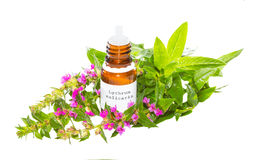 Essential oil from the Lythrum salicaria plant Royalty Free Stock Image
