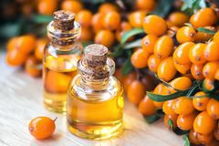 Essential oil of sea buckthorn Hippophae in glass bottle with fresh, juicy ripe yellow berries on the branch with green leaves-b. Eauty treatment. Spa concept stock photos