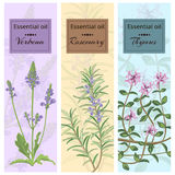Essential oil set collection. Verbena, rosemary, thymus banner set. Vector illustration EPS 10 Royalty Free Stock Photography