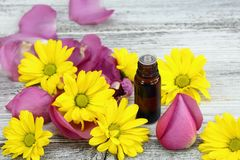 Essential oil from sweet smelling flowers Royalty Free Stock Images
