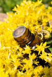 Essential oil with yellow flowers Royalty Free Stock Images