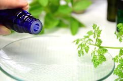 Essential oils. For aromatherapy treatment royalty free stock photo