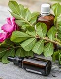 Essential oils bottle Stock Image