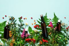 Essential oils in dark glass bottles and healing flowers, herbs on blue background. Holistic medicine approach. Healthy food. Eating, dietary supplements royalty free stock image