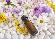 Essential oils and flower. In front of white background Royalty Free Stock Photography