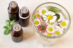 Essential oils and herbs Stock Photography