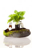 Essential oils from herbs Royalty Free Stock Photos