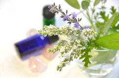 Essential oils with herbs Stock Images