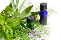 Essential oils with herbs Stock Photos