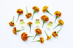 Essential oils of marigold flower. On white stock image