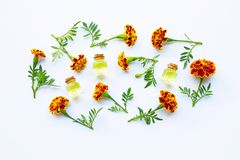 Essential oils of marigold flower. On white background stock photography