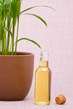 Essential oils for massage Stock Images