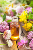 Essential oils and medical flowers herbs Stock Image