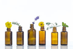 Essential oils and medical flowers herbs Royalty Free Stock Photography
