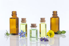 Essential oils and medical flowers herbs. On white Royalty Free Stock Photography
