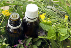 Essential oils and medical  herbs. Alternative medicine concept.Bottles with organic essential aroma oil from wildflowers plants Royalty Free Stock Images