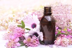Essential oils on medicinal flowers and herbs background: chamomile, clover, yarrow royalty free stock images