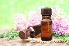 Essential oils with pink yarrow flowers royalty free stock images
