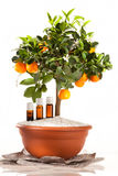Essential oils. Of orange tree royalty free stock photography
