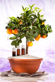 Essential oils. Of orange tree royalty free stock images