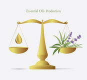 Essential oils production. Volumetric vector illustration. Herbs in a scalepan Stock Photos