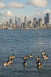 Essential Seattle Royalty Free Stock Images