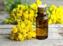 Essential tansy oil. Small bottle of essential tansy oil Royalty Free Stock Photography