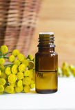Essential tansy oil Stock Images