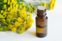 Essential tansy oil. Small bottle of essential tansy oil Stock Photos