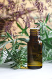Essential wormwood oil Stock Photography